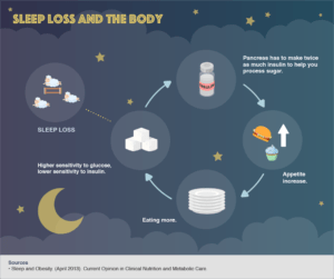 how the sleep and body cycle work